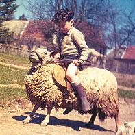michel-robert-monte-un-mouton